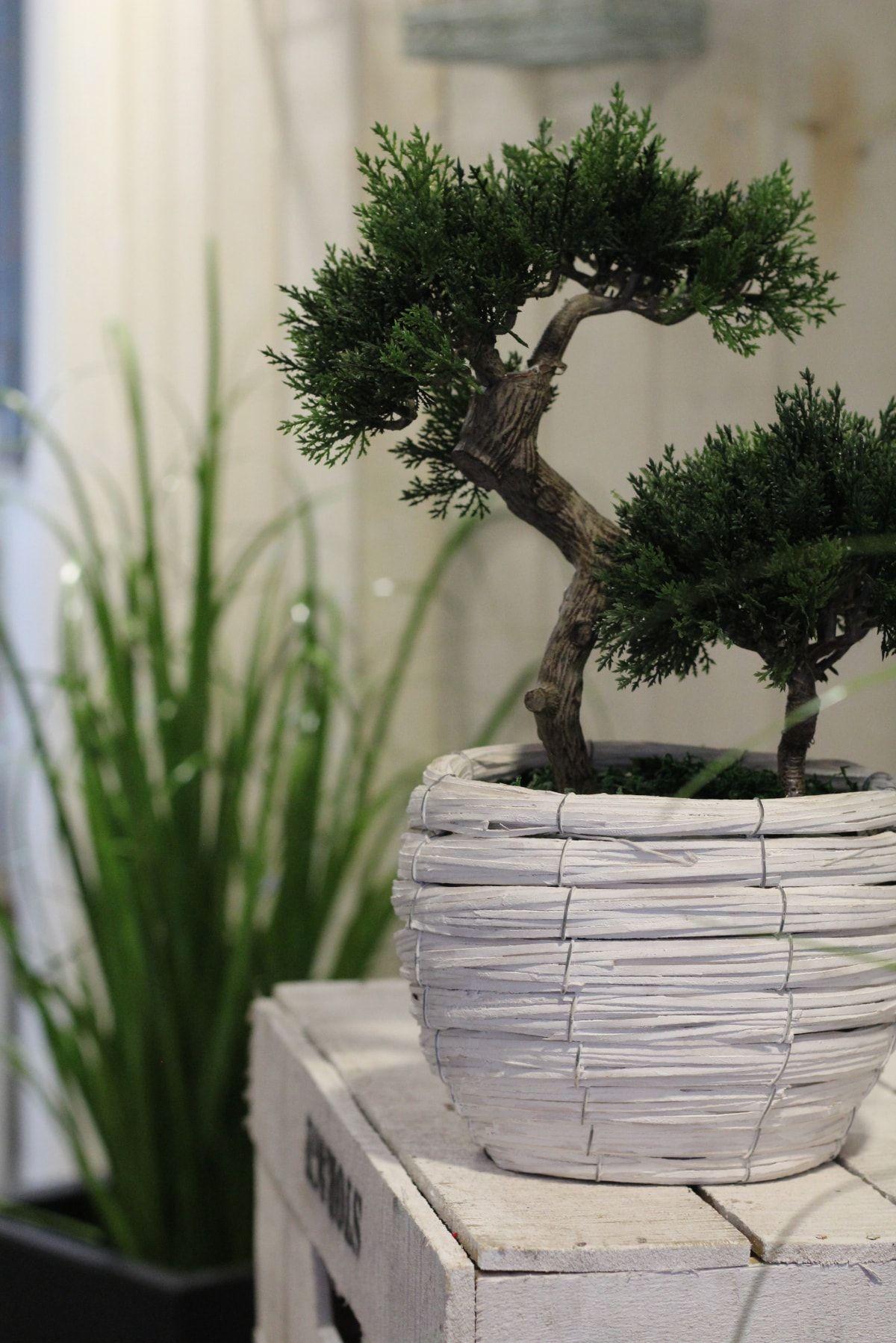 Alquiler de plantas para eventos