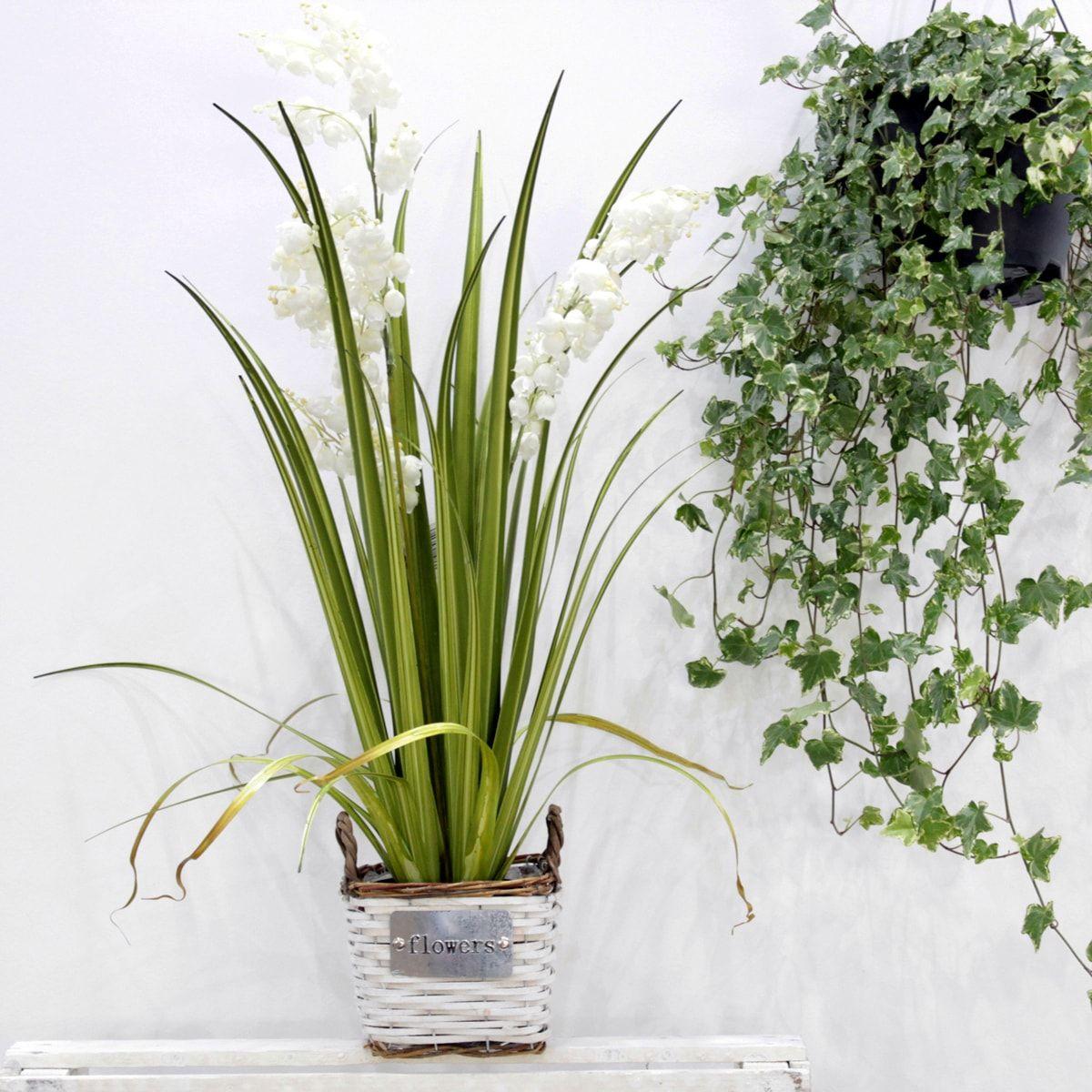 Alquiler de plantas naturales