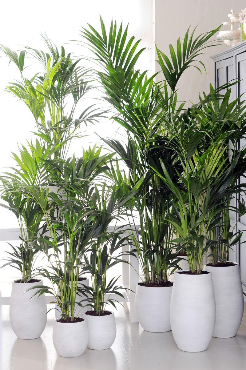 plantas artificiales para oficinas