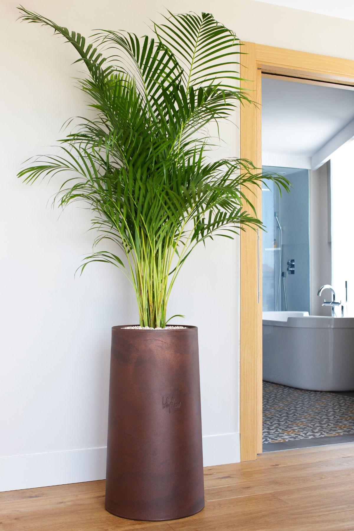 mejores plantas de oficinas grandes PLANTAS PARA OFICINA Tendencias Naturales