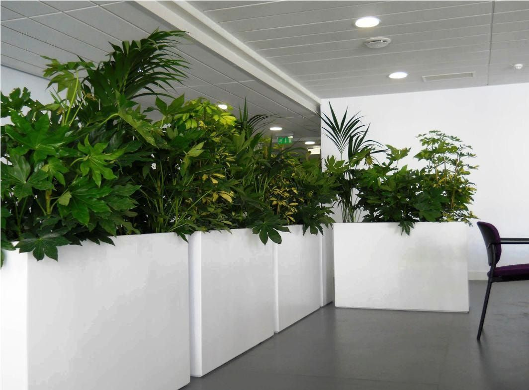🎍 PLANTAS PARA OFICINA | Tendencias Naturales
